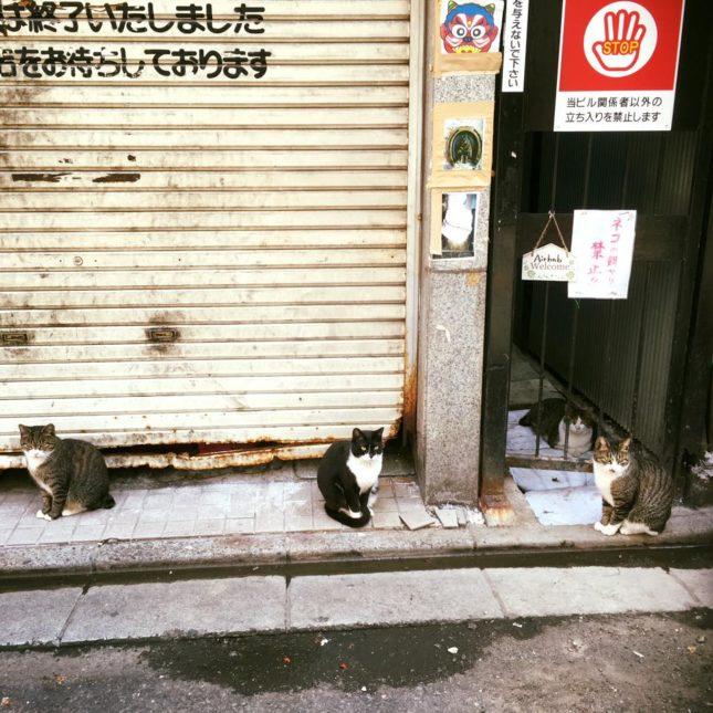 大宮 南銀 猫