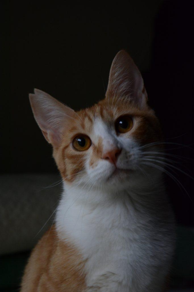 桜カット 猫