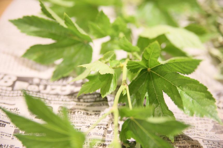 木苺 ベビーハンズ