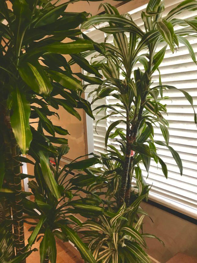 リラックス-人気-観葉植物