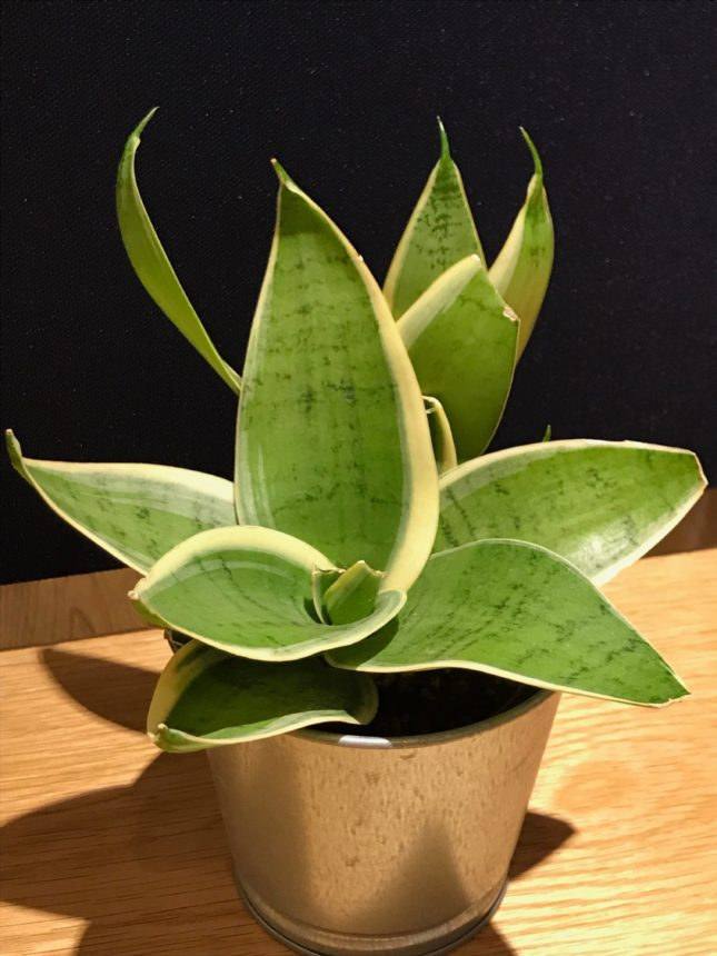 観葉植物-リラックス-人気